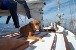 family_pics - zoe-on-deck-1.jpg
